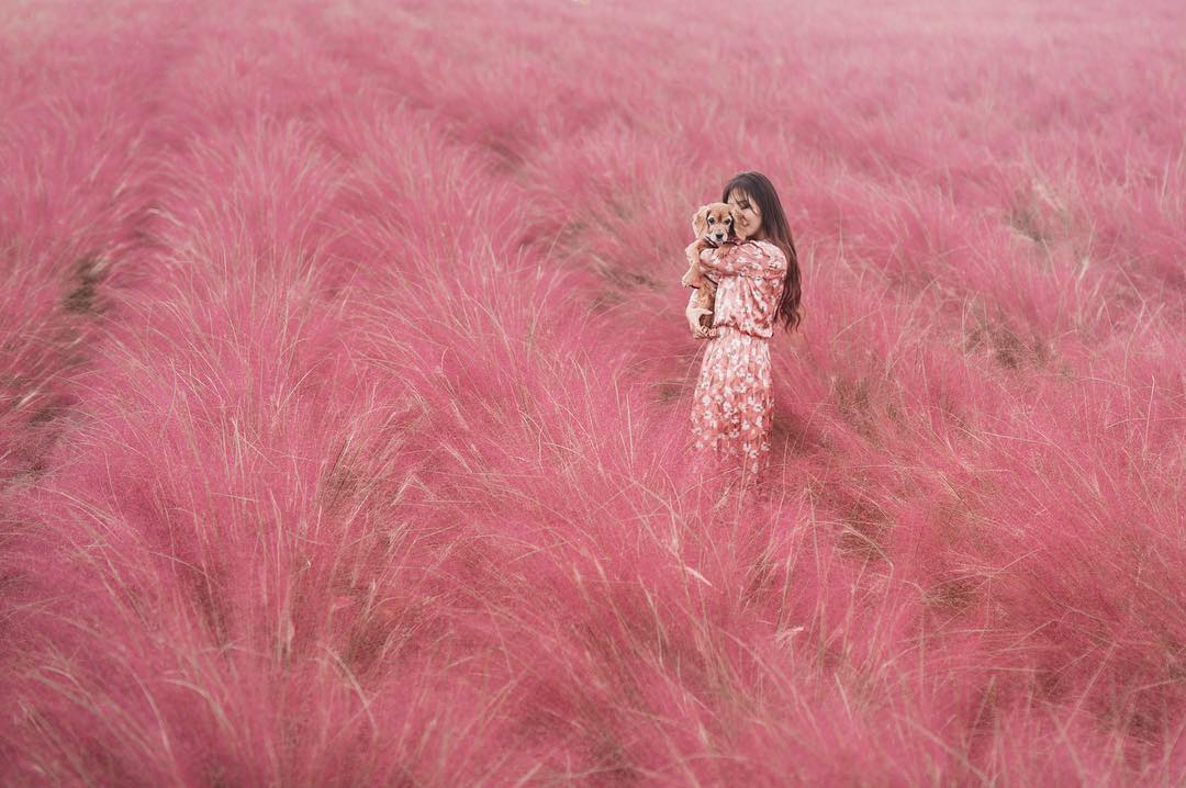 canh dong co Muhly 4